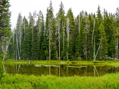 Badger Lake Trail, Fourmile Lake