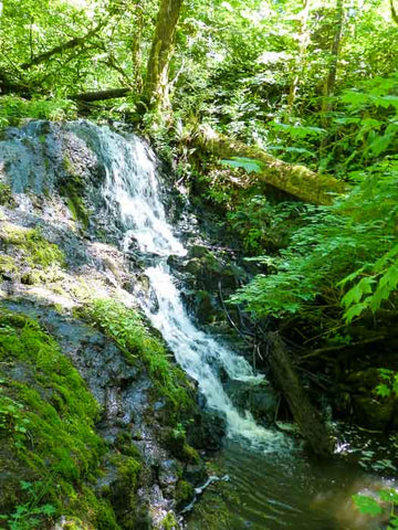 Mima Falls, Capitol State Forest