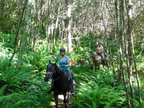 Equine Loop at Capitol State Forest