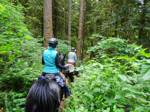Goodman Creek and South Willamette Trails