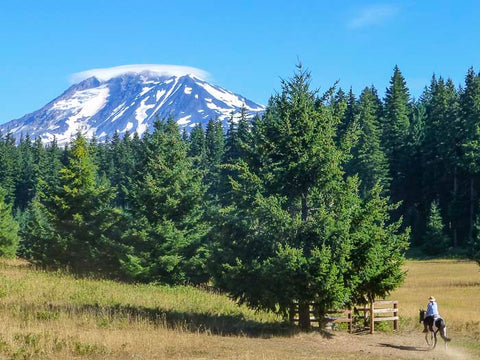 Mt. Adams Horse Camp