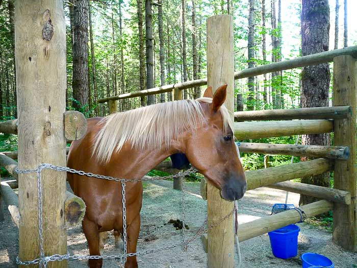 Santiam Horse Camp