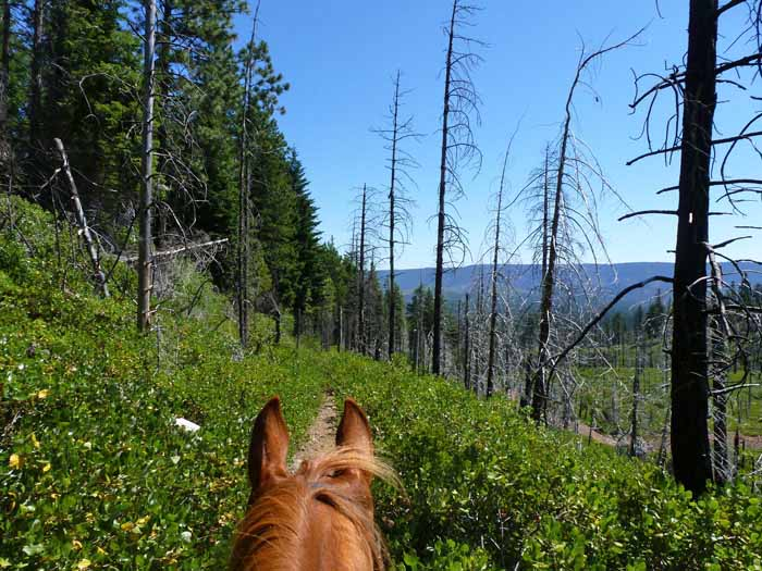 Bear Valley on the Metolius-Windigo Trail