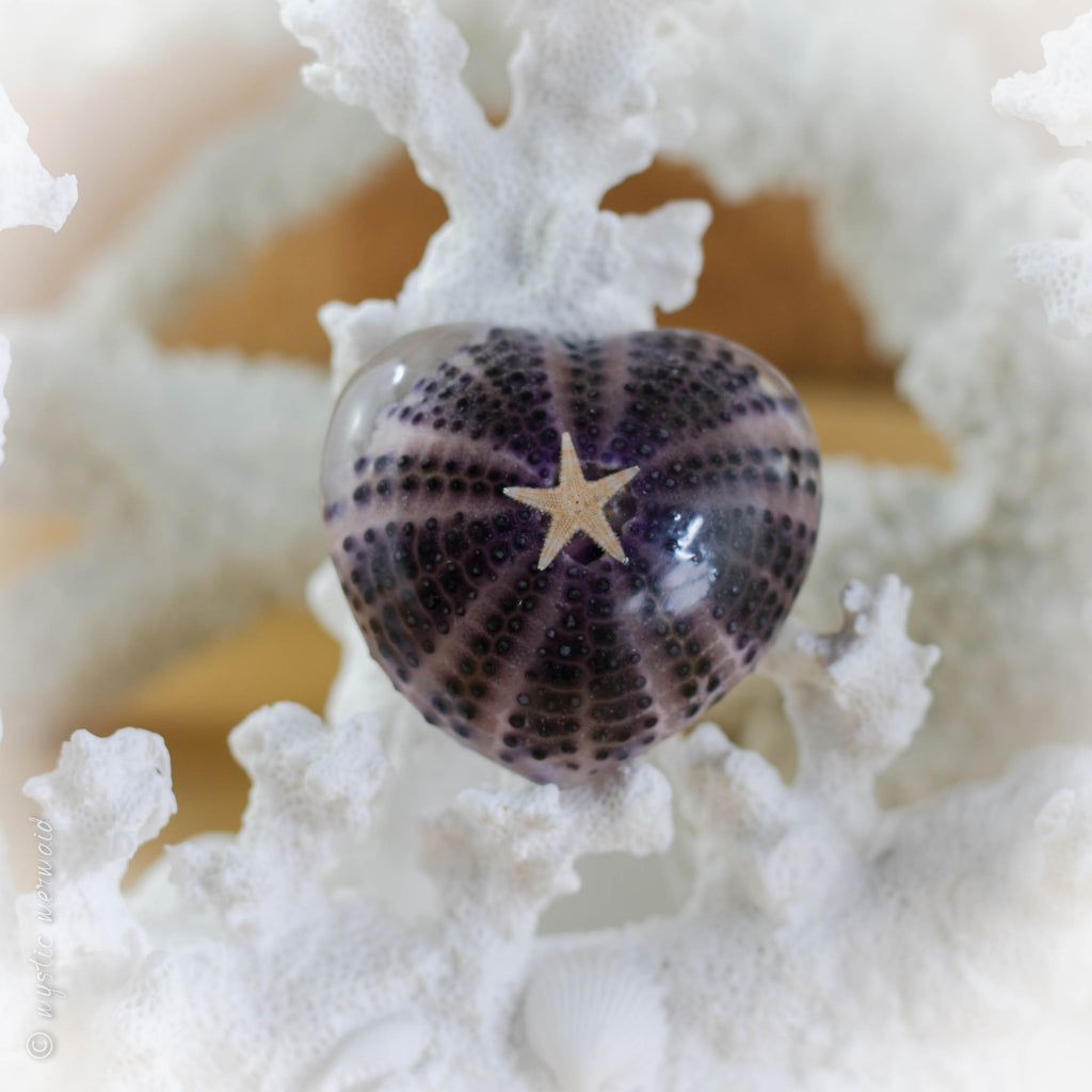 "Purple Sea Urchin with Amethyst ""secret garden"""