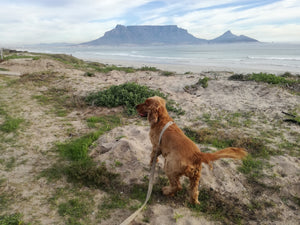 dog friendly beaches cape town