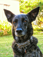 africanis rescue dog german shepard cross wearing shweshwe dog collar by hunt and howlingmoon