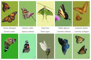 Butterfly collection print by Judy Link Cuddehe for Found Link Press.