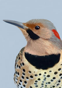 Flicker closeup painting. Print by Judy Link Cuddehe, Found Link Press.