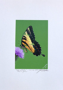 Tiger Swallowtail Butterfly on thistle flower painting on coldpress paper by Judy Link Cuddehe for Found Link Press.