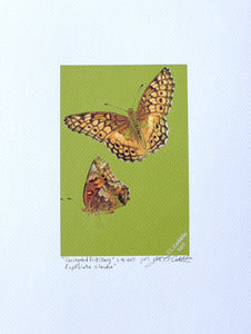 Variegated Fritillary Butterfly Painting on coldpress by Judy Link Cuddehe for Found Link Press.