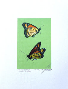 Viceroy butterflies painting on coldpress by Judy Link Cuddehe for Found Link Press.