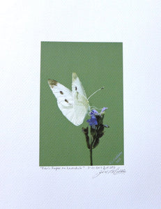 White cabbage butterfly on Lavender painting on coldpress paper by Judy Link Cuddehe for Found Link Press..