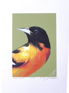 Baltimore Oriole Print on coldpress paper by Judy Link Cuddehe