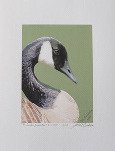 Canada Goose portrait painting on coldpress by Judy Link Cuddehe for Found Link Press.