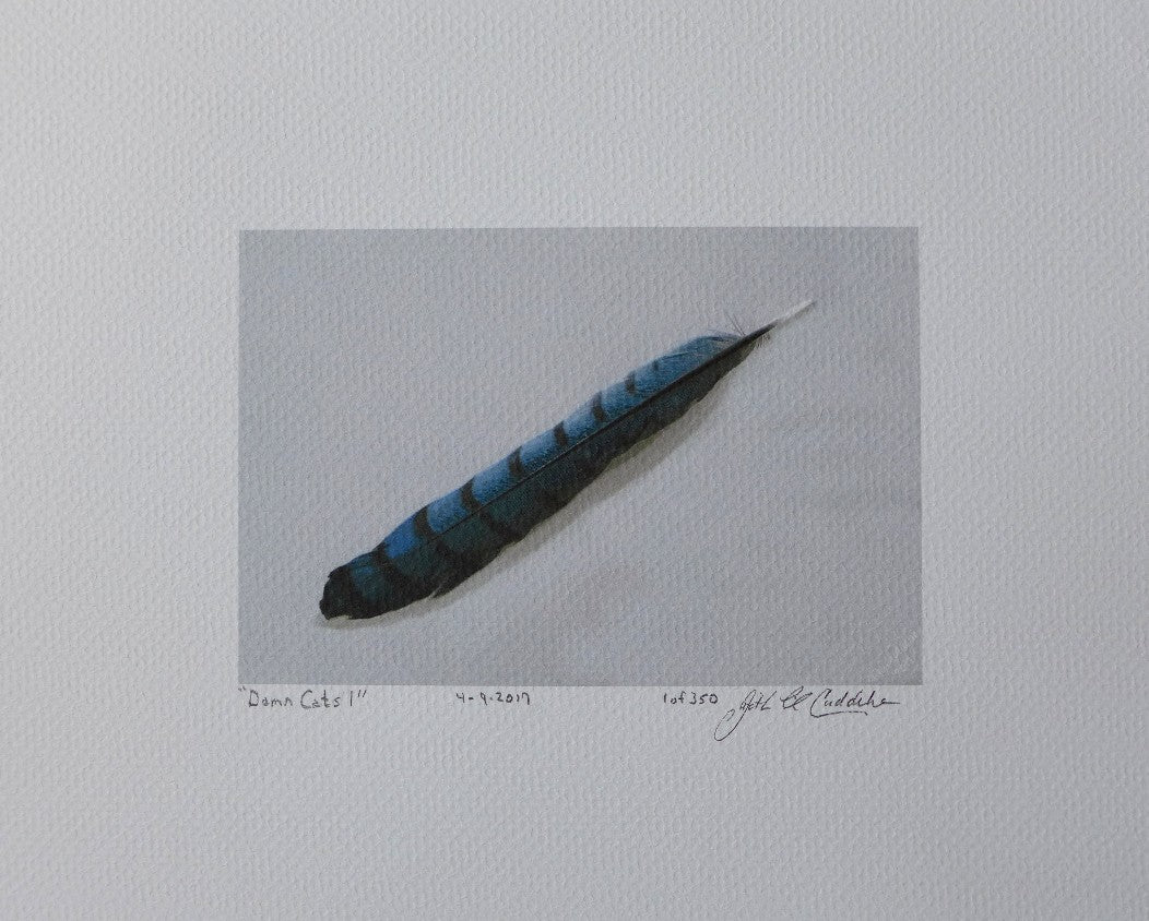 Print of Blue Jay Feather painting by Judy Link Cuddehe, Found Link Press, on coldpress paper.
