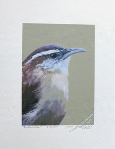Carolina Wren painting on coldpress by Judy Link Cuddehe for Found Link Press.
