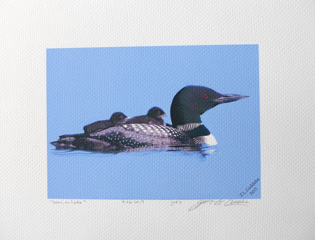 Loon with chicks Print by Judy Link Cuddehe for Found Link Press.