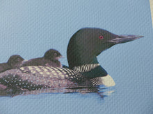 Loon with two chicks on its back, painting by Judy Link Cuddehe for Found Link Press.