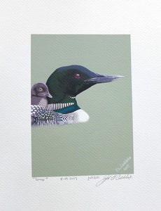 Loon with chick painting on coldpress by Judy Link Cuddehe for Found Link Press.