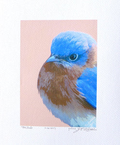 Puffed up, stern, male bluebird painting by Judy Link Cuddehe.