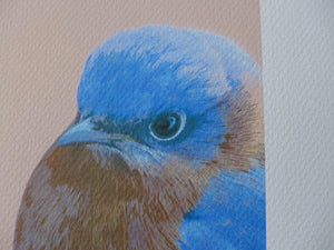 Detail of male bluebird art by Judy Link Cuddehe.