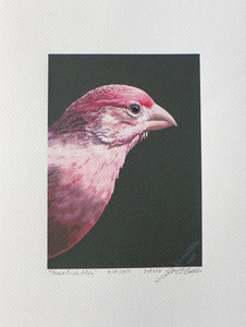 Male House Finch painting on coldpress by Judy Link Cuddehe