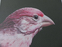 Detail of Male House Finch portrait by Judy Link Cuddehe for Found Link Press.