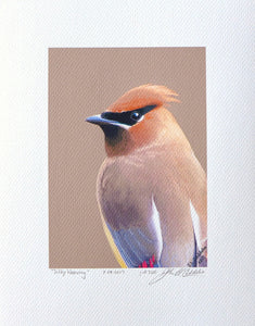 Ceder Waxwing portrait painting on coldpress by Judy Link Cuddehe for Found Link Press.