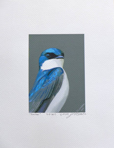 Tree swallow in superhero pose painting on coldpress by Judy Link Cuddehe for Found Link Press.