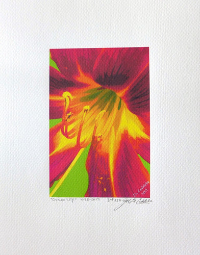 Crimson Lily is a painting by Judy Link Cuddehe for Found Link Press.