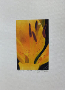 Yellow Lily painting by Judy Link Cuddehe for Found Link Press.