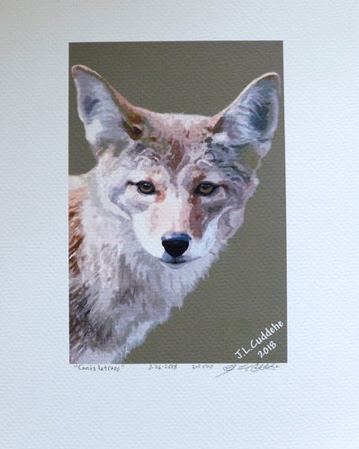 Coyote portrait painting by Judy Link Cuddehe for Found Link Press.