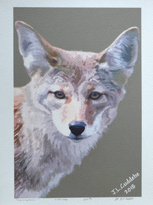 "Coyote Print ""Canis latrans"" by Judy Link Cuddehe for Found Link Press."