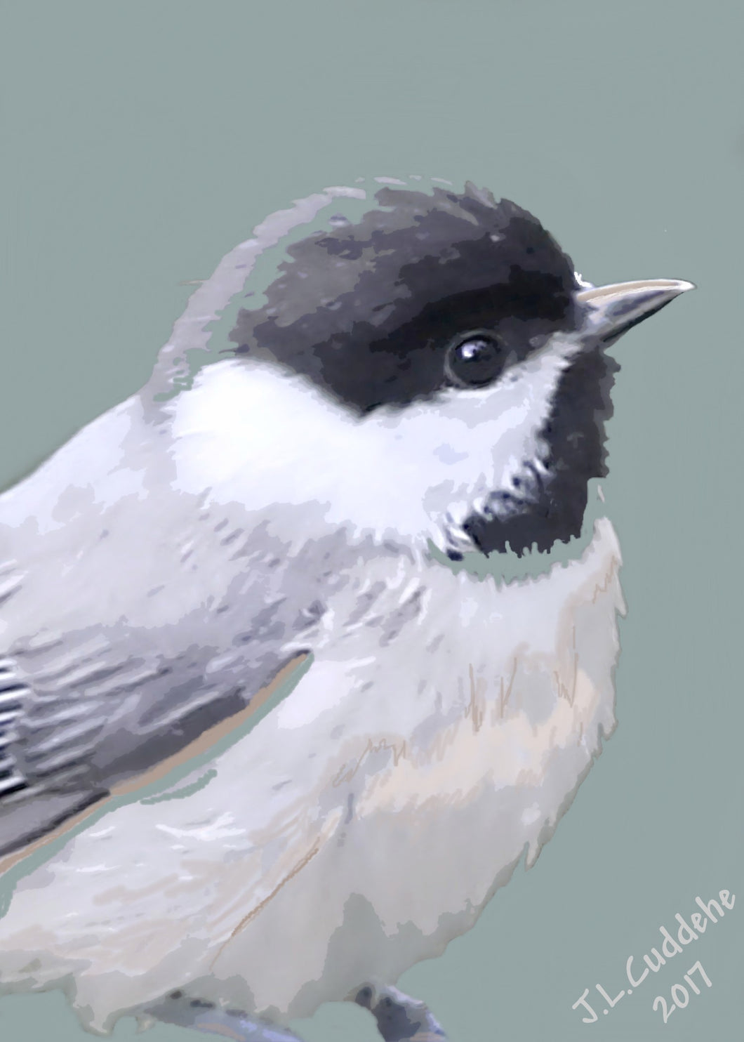 Carolina Chickadee puffed up against the cold, print by Judy Link Cuddehe for Found Link Press.