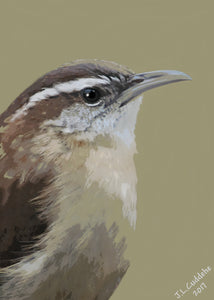 Carolina Wren Print by Judy Link Cuddehe for Found Link Press.