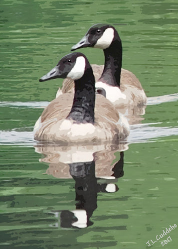 Painting of two Canada Geese swimming on reflecting water, by Judy Link Cuddehe for Found Link Press.