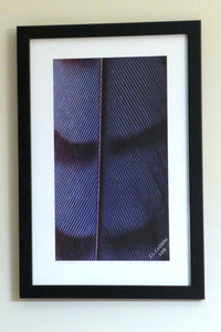 """Jay Architecture"" framed photo by Judy Link Cuddehe for Found Link Press, framed"
