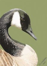 Canada Goose portrait print by Judy Link Cuddehe for Found Link Press.