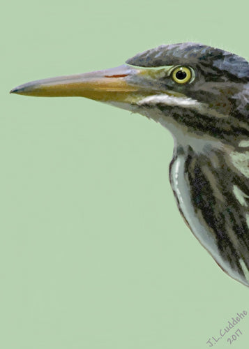 Green Heron Print by Judy Link Cuddehe for Found Link Press.