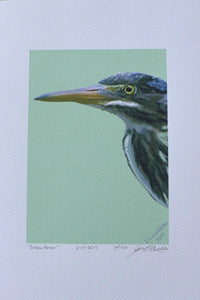 Immature Green Heron Painting on Coldpress by Judy Link Cuddehe for Found Link Press.
