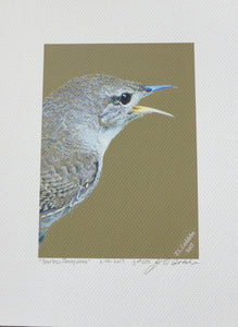 House Wren or Jenny Wren Print on Coldpress Paper by Judy Link Cuddehe for Found Link Books.