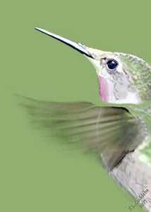 Ruby-Throated Hummingbird portrait print by Judy Link Cuddehe for Found Link Press.