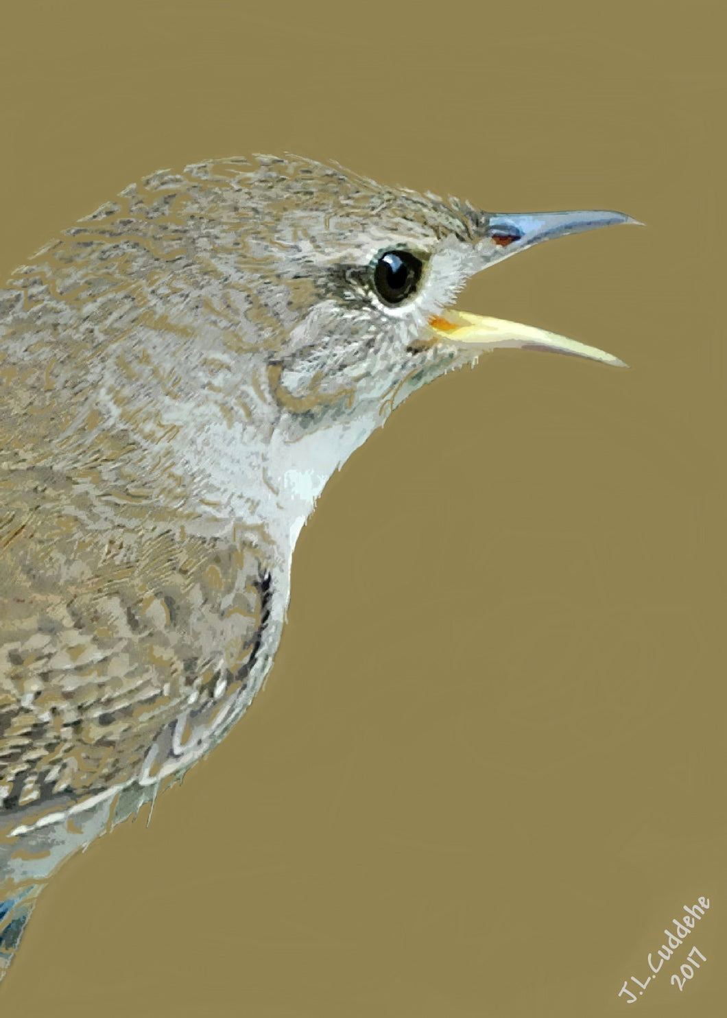 House Wren or Jenny Wren Print in 4 colors, by Judy Link Cuddehe for Found Link Books.