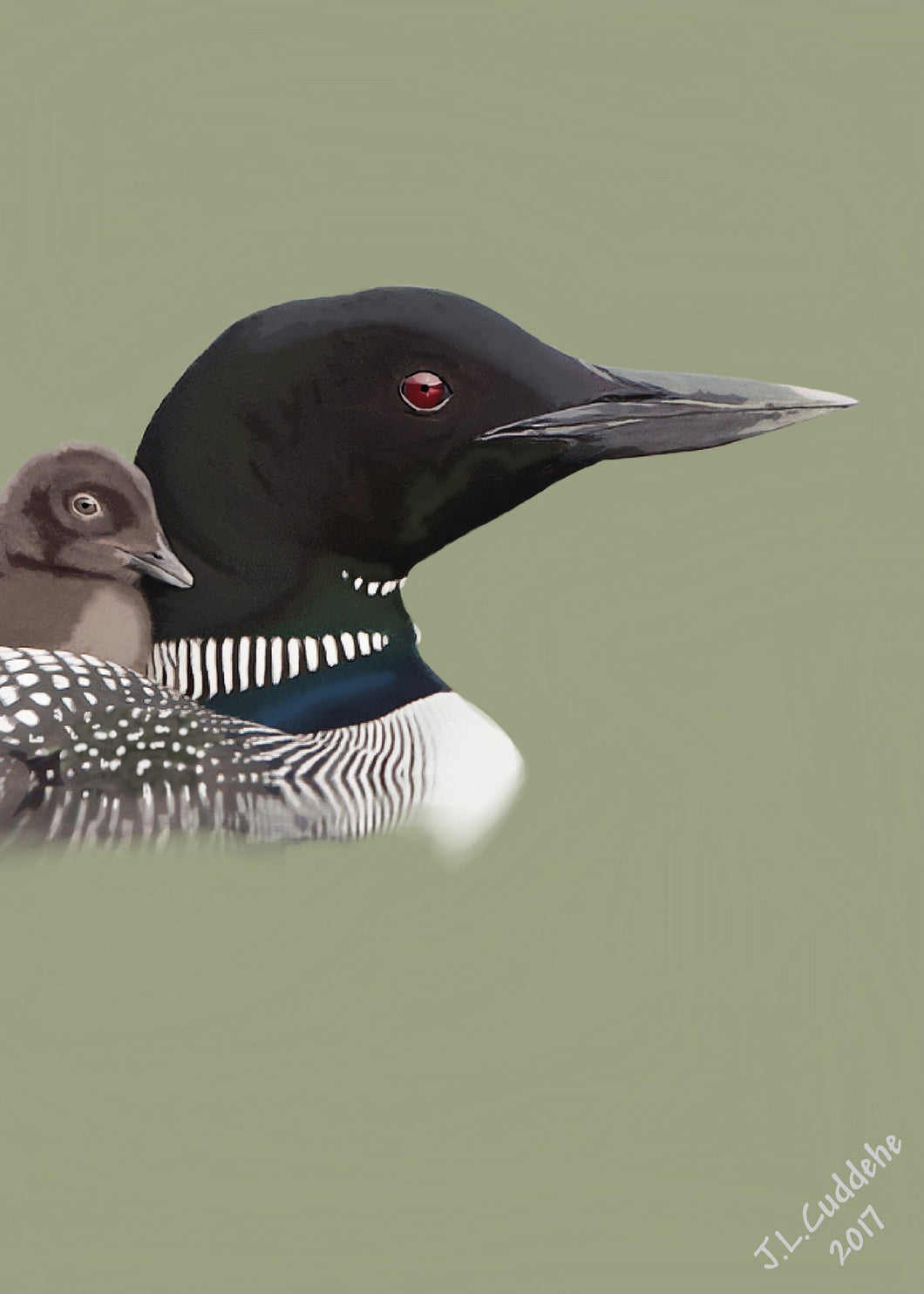 Loon with chick portrait print by Judy Link Cuddehe for Found Link Press.