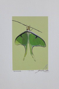 Luna moth Print on coldpress paper, by Judy Link Cuddehe for Found Link Press.