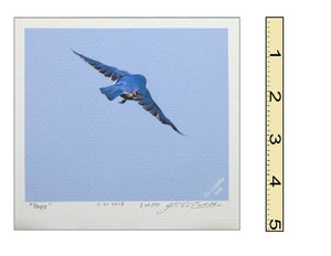 """Hope"" Bluebird Mini-Print"