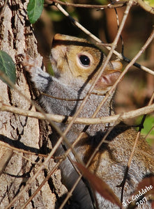 Squirrel stretching in the sun, photo by Judy Link Cuddehe of Found Link Press.