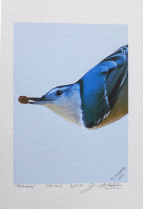 Nuthatch portrait painting on coldpress by Judy Cuddehe for Found Link Press.