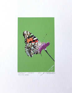 Painted Lady Butterfly on Dianthus flower painted on coldpress paper by Judy Link Cuddehe for Found Link Press.