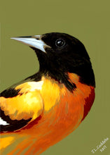 Northern Oriole painting by Judy Link Cuddehe for Found Link Press.